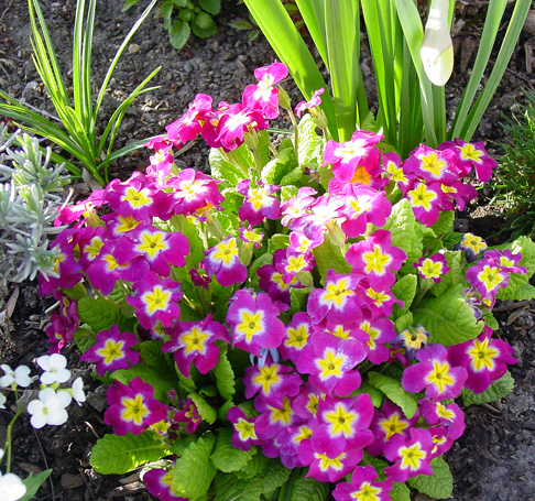 How To Mulch A Flower Bed Rindenmulch Wikipedia How To